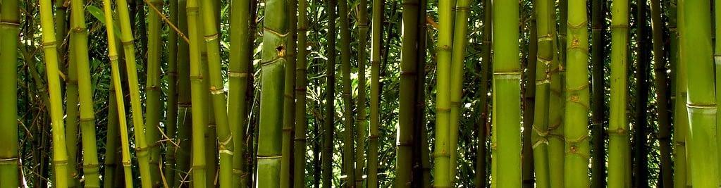 Bambus-Bæredygtig-tekstil